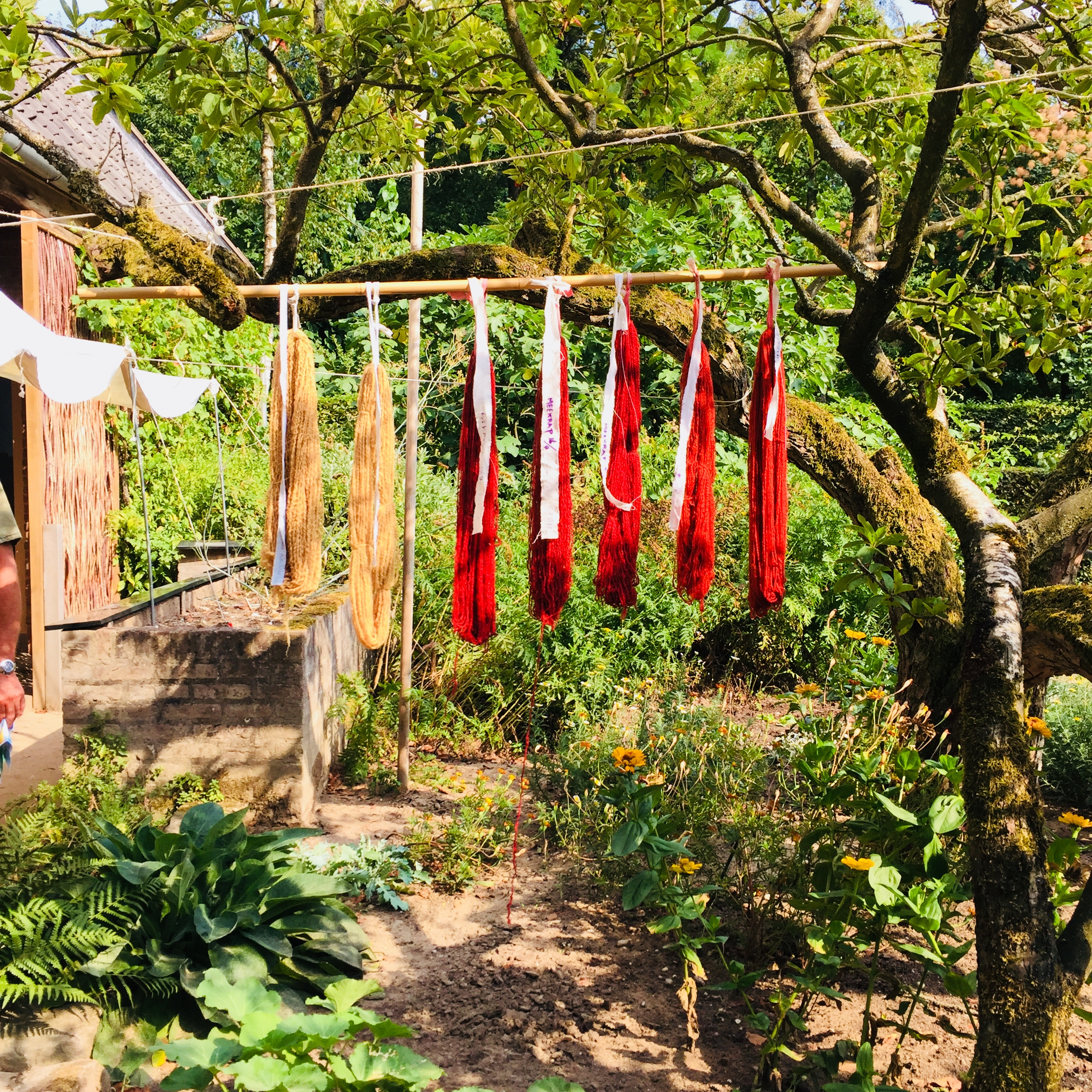 Dyed wools drying in the tree.jpg