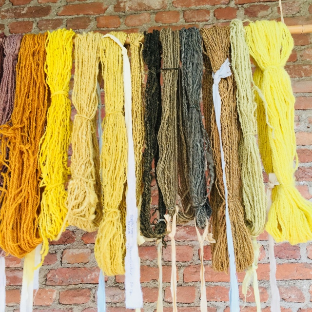 Dyed yellow wools.jpg